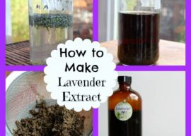 How To Make Lavender Extract from The Savory Lotus