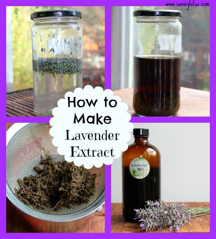 How to extract lavender oil