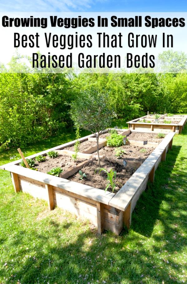 Growing Veggies In Small Spaces Best Veggies That Grow In Raised