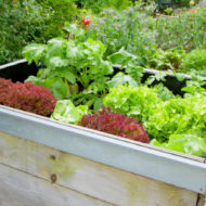 Growing Veggies In Small Spaces – Best Veggies That Grow In Raised Garden Beds