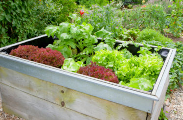 Growing Veggies In Small Spaces – Best Veggies That Grow In Raised Garden Beds